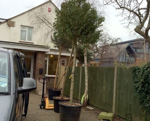 tree_pots